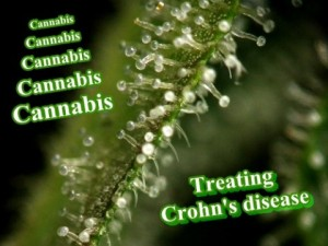 cannabis-treating-crohns-disease